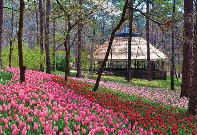 to 10 things to do in hot springs ar
